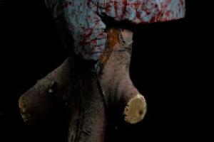Exposición «Pelícanos en el Cabo de Gata»