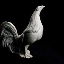 Gallo Combatiente Andaluz
