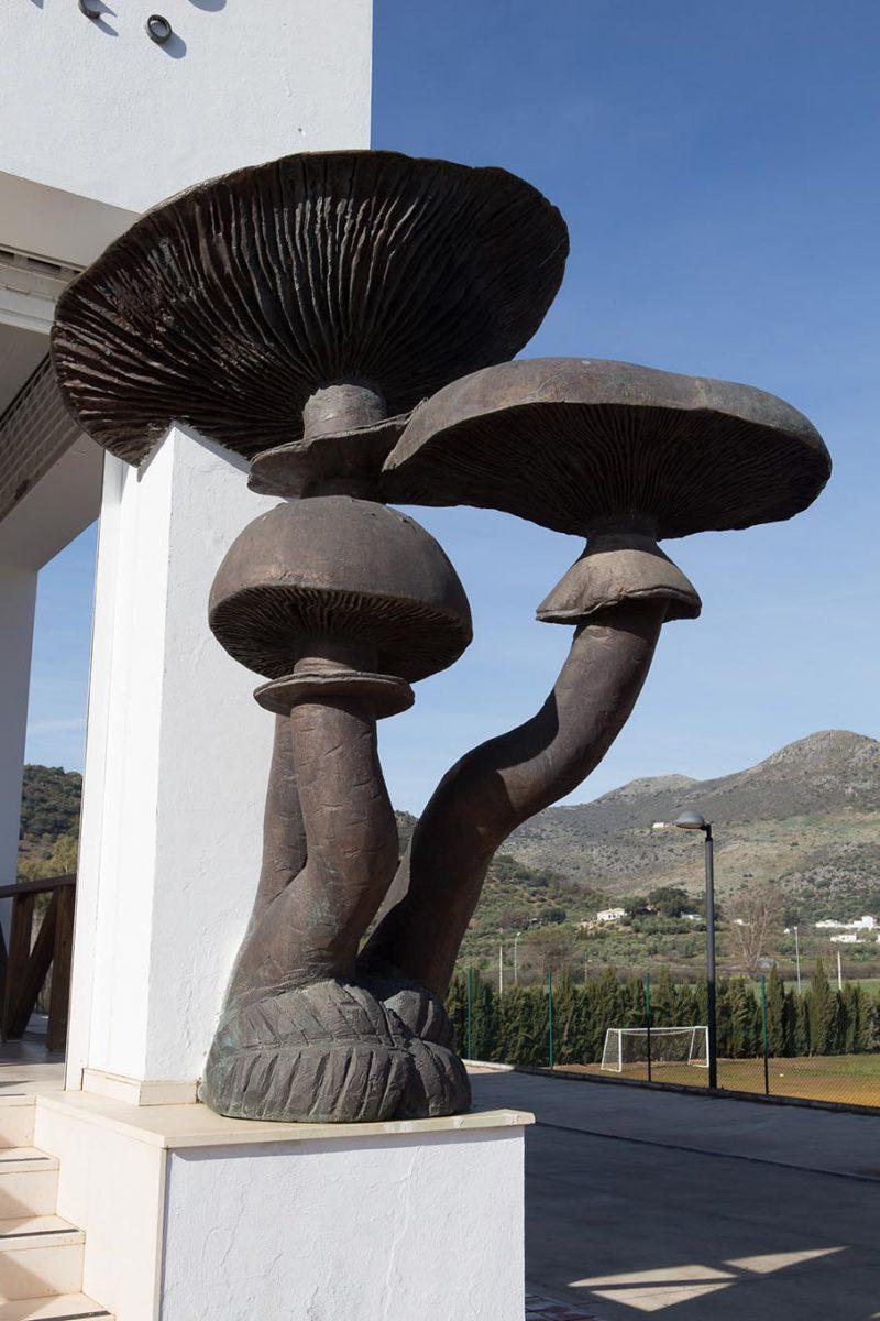 Escultura armillarea mellea seta del membrillo for Jardin micologico la trufa